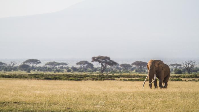Amboseli_Onetouch_Live-35