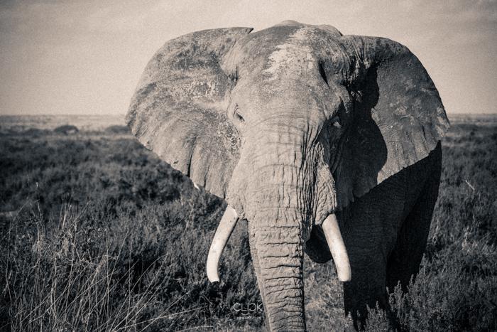 Amboseli_Onetouch_Live-9