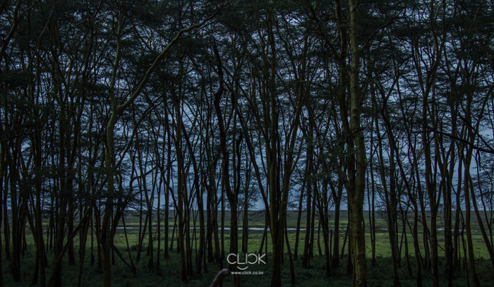 Lake_Nakuru-1