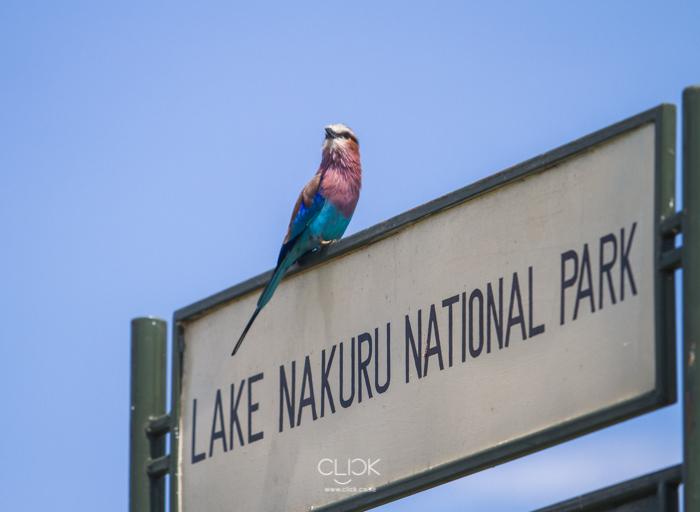 OnetouchLive Lake Nakuru