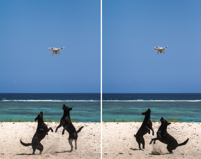 Mwangi_Kirubi_DroneDogs-1