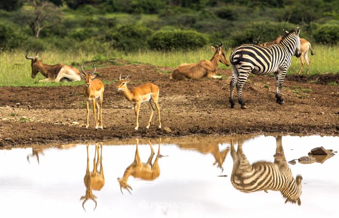 Nairobi_National_Park-10