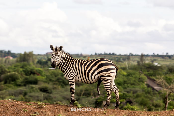Nairobi_National_Park-11