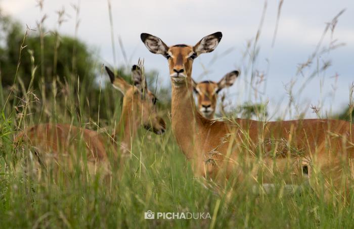 Nairobi_National_Park-13