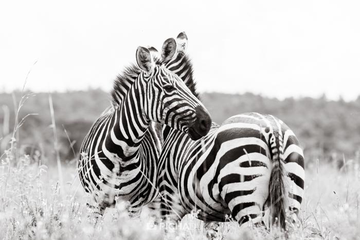 Nairobi_National_Park-7