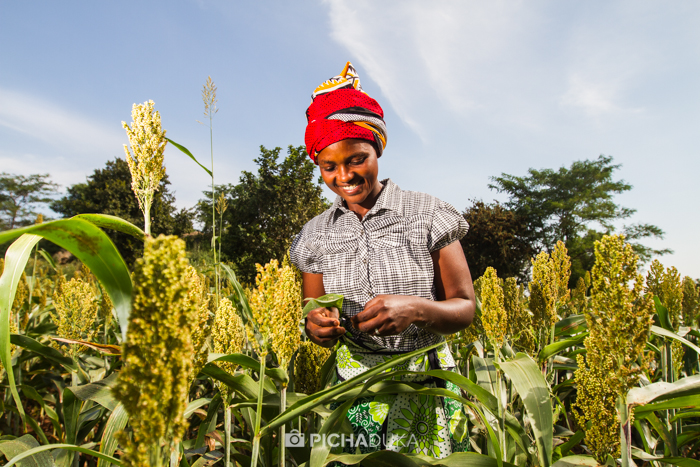 Farm_Africa_Kitui_by_Mwangi_Kirubi-8