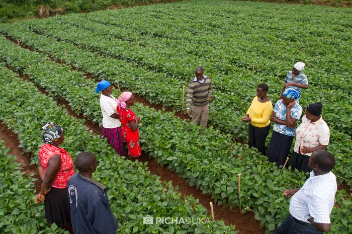 Farm_Africa_Western_Kenya_by_Mwangi_Kirubi-12