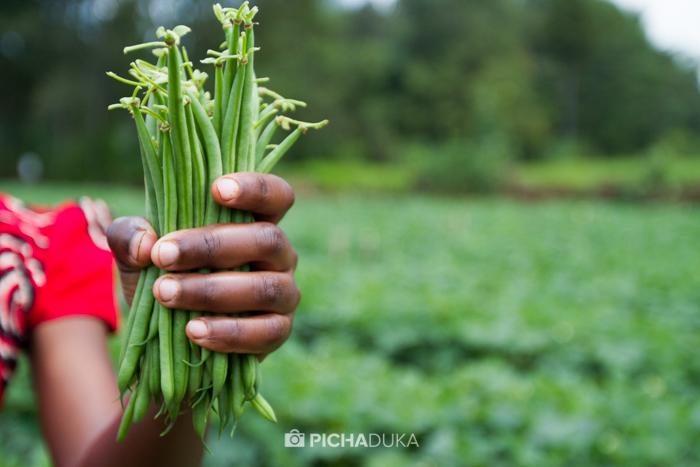 Farm_Africa_Western_Kenya_by_Mwangi_Kirubi-14