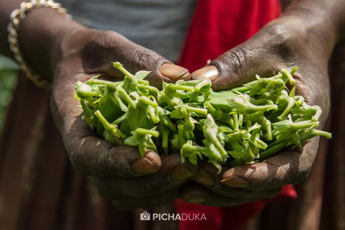 Farm_Africa_Western_Kenya_by_Mwangi_Kirubi-2