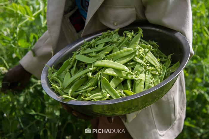 Farm_Africa_Western_Kenya_by_Mwangi_Kirubi-6