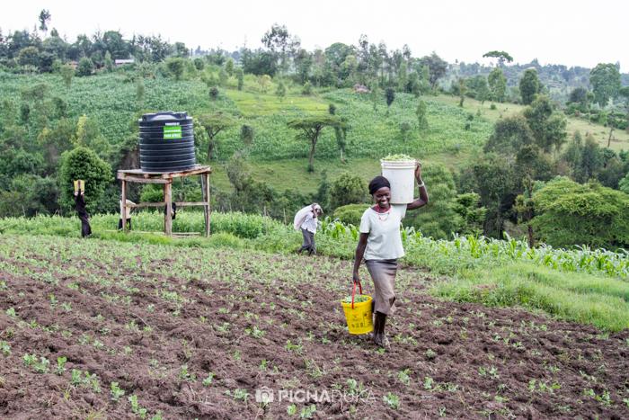 Farm_Africa_Western_Kenya_by_Mwangi_Kirubi-7