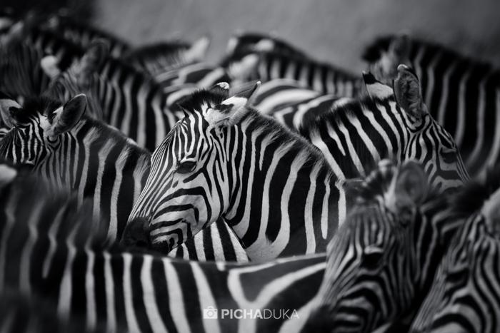 Masai_Mara-by-Mwangi_Kirubi-12