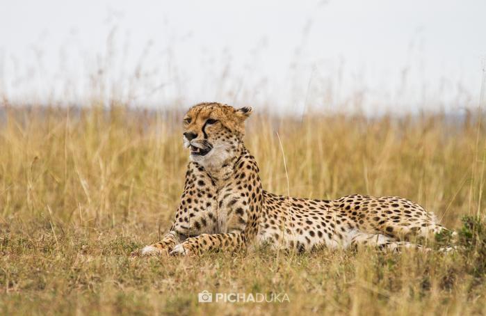 Masai_Mara-by-Mwangi_Kirubi-2