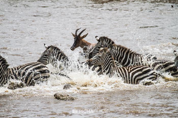 Masai_Mara-by-Mwangi_Kirubi-21