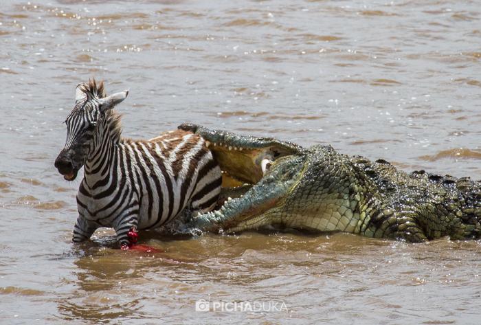 Masai_Mara-by-Mwangi_Kirubi-24