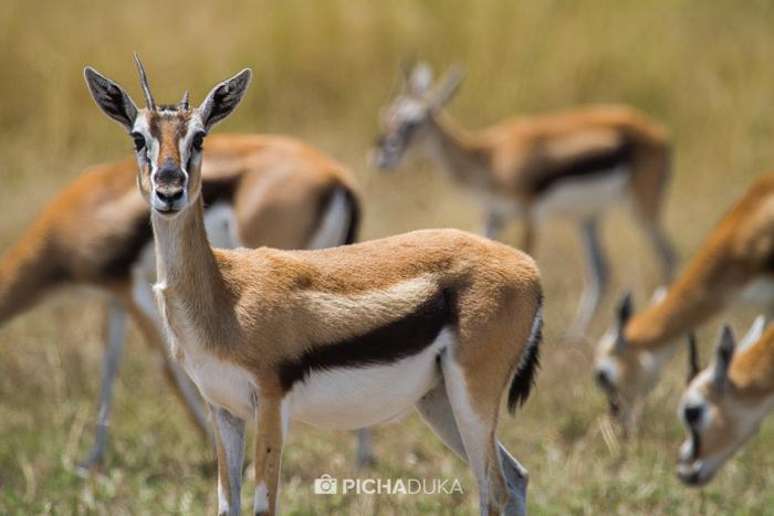 Masai_Mara-by-Mwangi_Kirubi-28