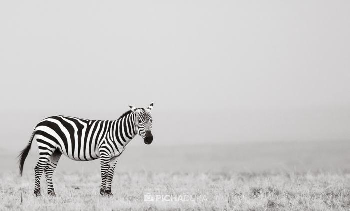 Masai_Mara-by-Mwangi_Kirubi-33