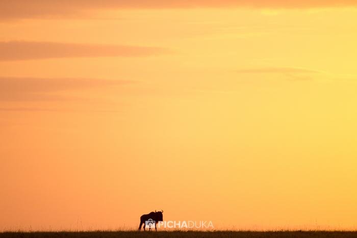 Masai_Mara-by-Mwangi_Kirubi-36