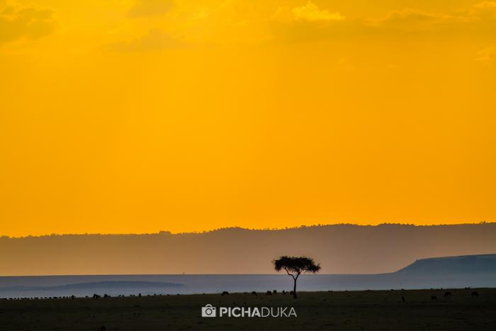 Masai_Mara-by-Mwangi_Kirubi-42