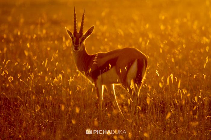 Masai_Mara-by-Mwangi_Kirubi-46