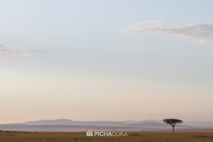 Masai_Mara-by-Mwangi_Kirubi-47