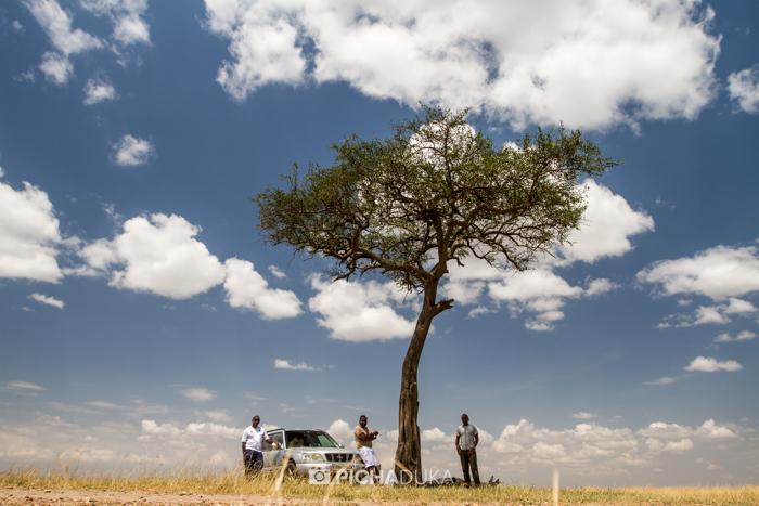 Masai_Mara-by-Mwangi_Kirubi-48