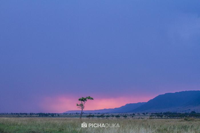 Masai_Mara-by-Mwangi_Kirubi-49
