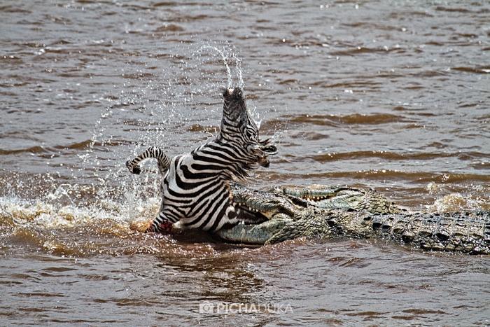 Masai_Mara-by-Mwangi_Kirubi-50