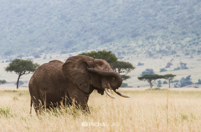 Masai_Mara-by-Mwangi_Kirubi-9