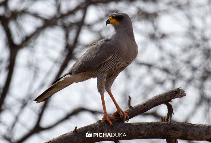 Meru-National-Park-Mwangi-Kirubi-24