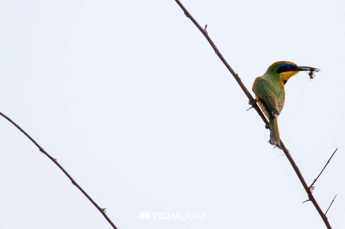 Meru-National-Park-Mwangi-Kirubi-38