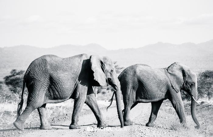 Meru-National-Park-Mwangi-Kirubi-46