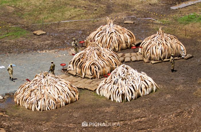 Ivory-Burn-Kenya-8