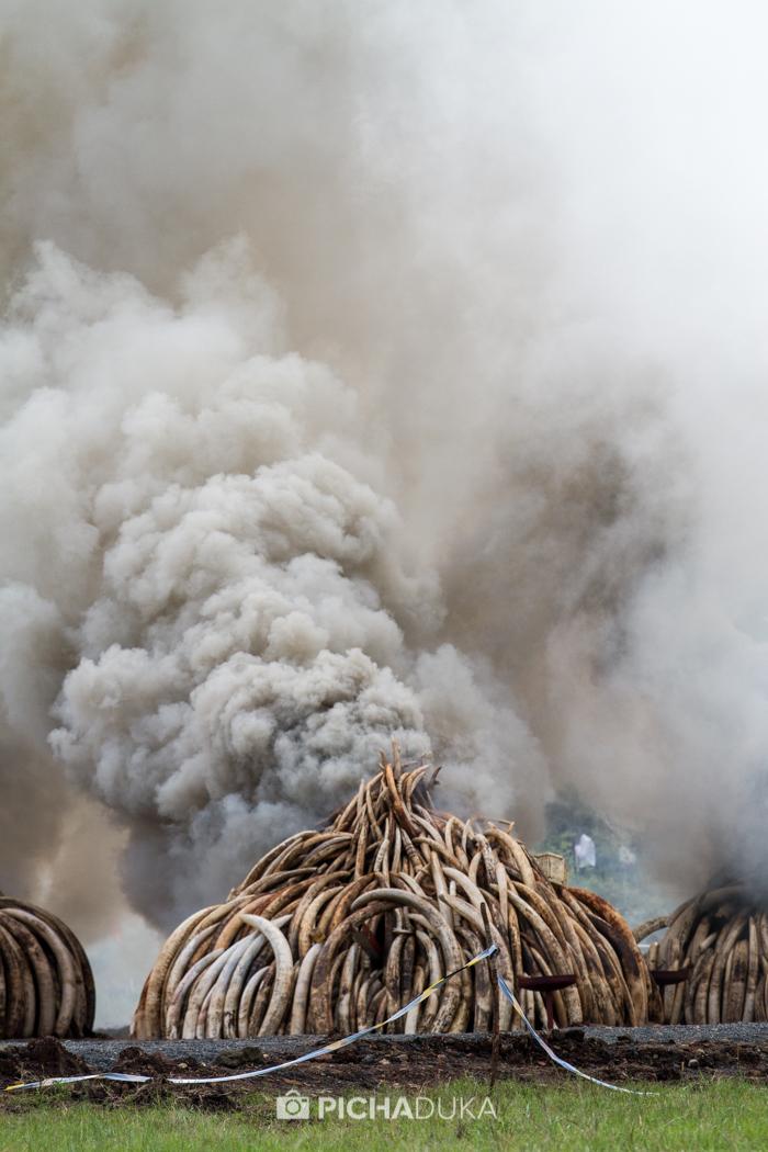 Kenya-Ivory-Burning-28