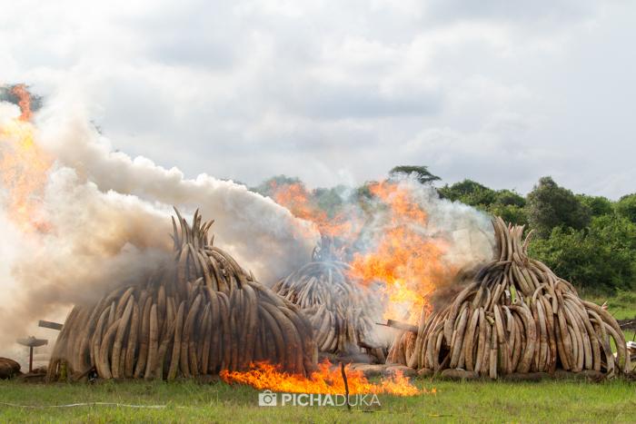 Kenya-Ivory-Burning-32