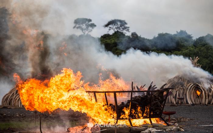 Kenya-Ivory-Burning-34