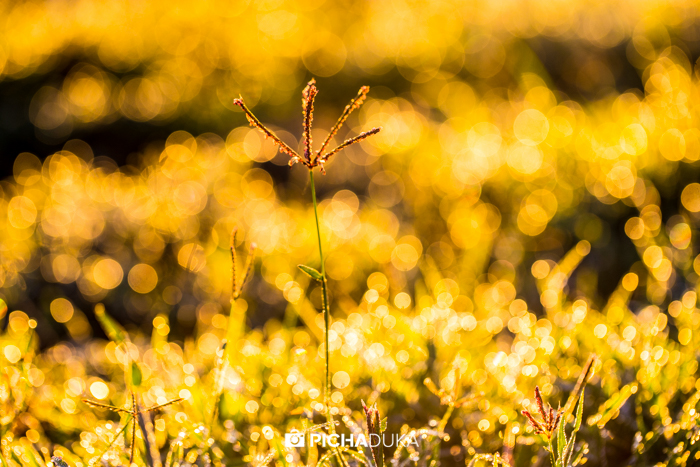 A blade of grass at sunrise in Hell's Gate National Park on 9th May 2016.
