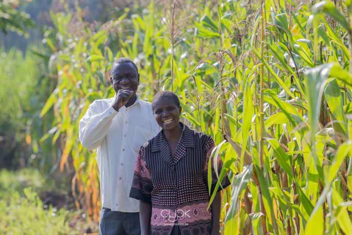 Christopher Makana and his wife Jane Makana in their maize farm in Mumias, Kenya, on 23rd July 2016. They switched from sugar cane farming because it took 22 months to mature and payments for cane delivered to the factory always came late. Switching to maize farming has them making two harvests a year. From the proceeds of the harvests, they've been able to educate their children to University, purchase a motorcycle which their son uses as a taxi and build a better house. The Makanas received training in maize farming from Kenya Agricultural and Livestock Research Organisation through a program funded by Agra.