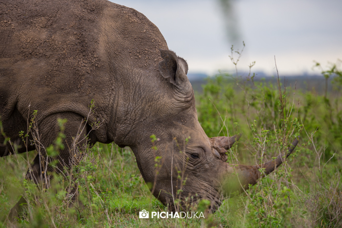 A rhino in Nairobi National Park on 25th October 2017.