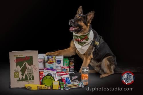 Medium Of German Shepherd Police Dog