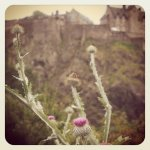 #edinburgh #scotland #thistle (Taken with instagram)