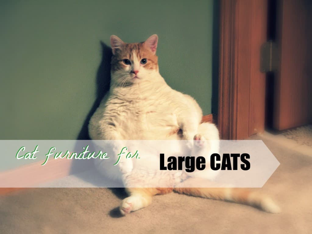 Nice Cat Furniture Cat Furniture For Large Cats Fluffy Kitty