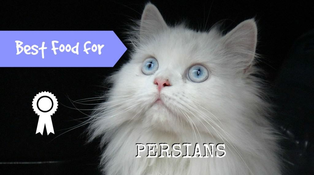 Best Cat Food for Persians 2018 {Guide + Reviews} - Fluffy Kitty