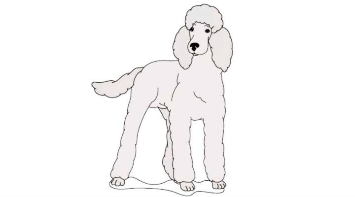 how-to-draw-a-poodle_14