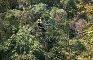 chiang mai jungle flight