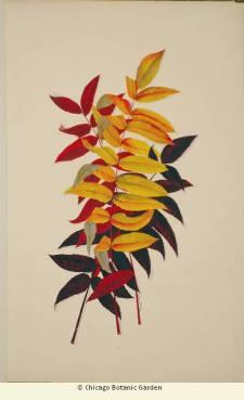 ILLUSTRATION: autumnal leaves.