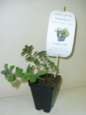PHOTO: An oregano plant with a thank-you note attached.