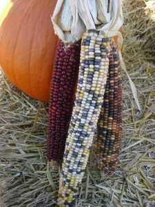 PHOTO: Three ears of Indian corn leaning against a pumpkin.