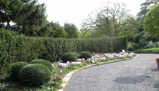 PHOTO: The Home Landscape Garden, dotted with clusters of Colchicum 'Violet Queen'