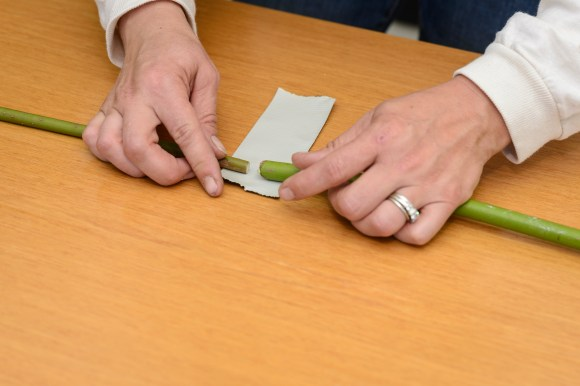 PHOTO: Place two branch ends together with a gap of 1/2 inch, and tape together with duct tape.